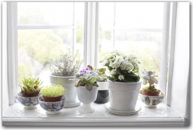 Комнатные растения на подоконнике